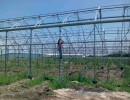 Greenhouse for vegetable production - complete electrical installation